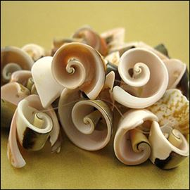 24 Pieces Of Green Everlasting Spiral Seashell Beads